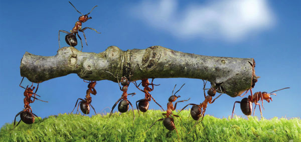 Member Benefits: Conscious Collaboration of Ants