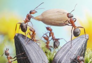 Ants Enjoy A Collaborative Network